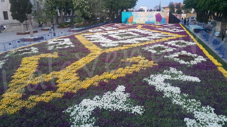 laleventure tulip lale turkey istanbul lale festivali tulip festival hali carpet