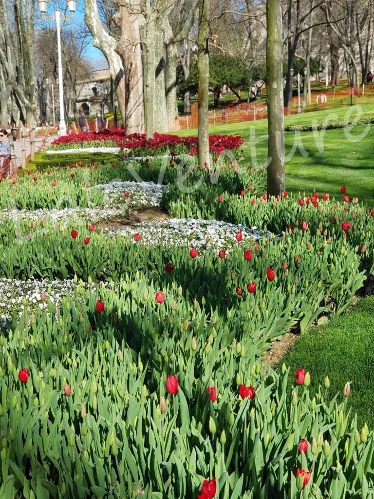 Istanbul Tulip Gulhane Park