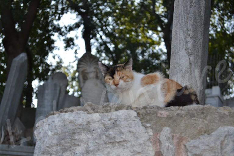 Istanbul Cats Pierre Lotti Eyup