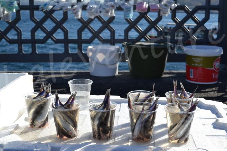 Sardines baits Galata Bridge