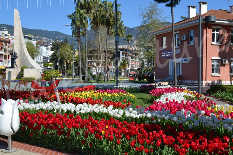 laleventure lale tulips in alanya city turkey